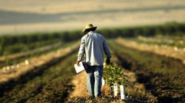 Terras agrícolas, Califórnia