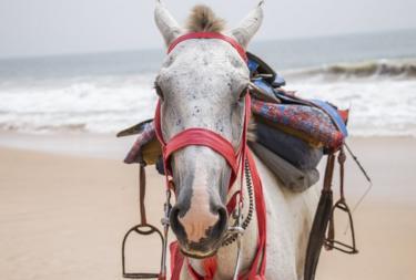 Horse looking at camera