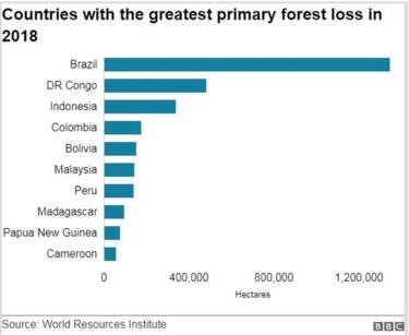 graphic primary forest loss