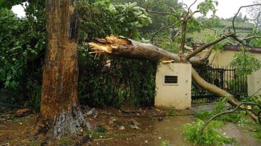 A view of a fallen tree at the entrance of a house after Cyclone Fani made landfall