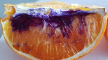 An orange slice, with much of it appearing purple
