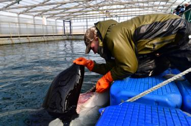 Orca and keeper, 1 Mar 19