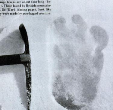 दिसंबर 1951 में माउंट एवरेस्ट पर मिले बहुत बड़े पैरों के निशान की तस्वीर