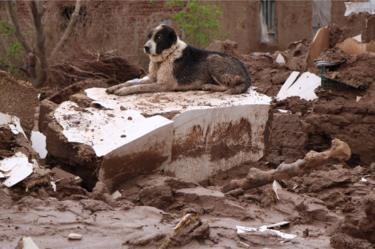 Afghanistan - stray dog sitting among debris