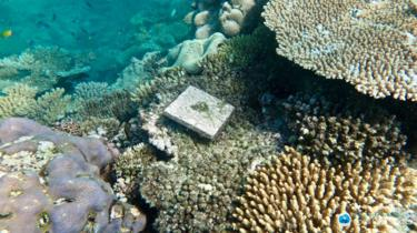 A research tile tracking coral growth in the Great Barrier Reef