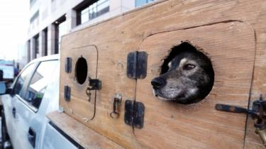 Dog looking out of a car on the streets