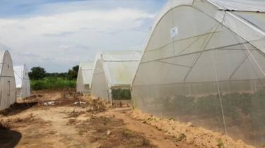 Shehu Usman Chindo Yamusa's greenhouses
