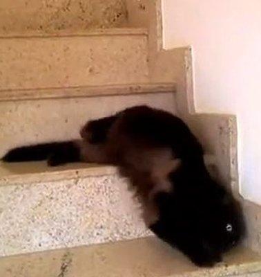 Still from cat video
