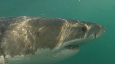 Barely a single great white shark has been spotted off the city's coast for two years, where once there were hundreds.