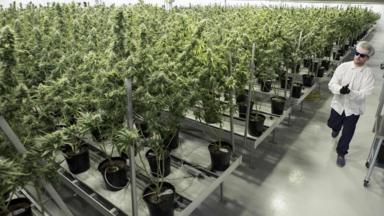 post-image-Legalising cannabis 'would raise £1bn in tax for the UK'