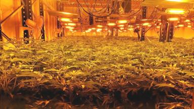 post-image-Scunthorpe cannabis farm worth £4m uncovered