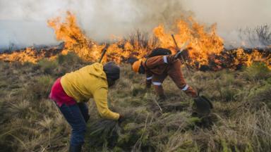 post-image-Mount Kenya wildfire: Marijuana farmers blamed