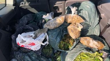 post-image-Bags of cannabis fished from River Nene