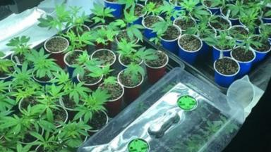 post-image-Two arrests after Potters Bar cannabis factory raid