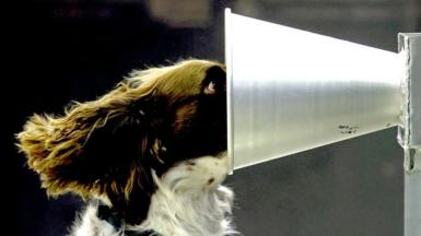 A dog puts its nose into a metal funnel