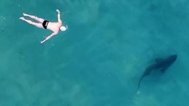 Man swiming close to a shark