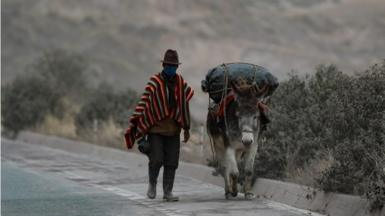 A farmer and his donkey walk on a road covered by the ash expelled by the Sangay volcano, in Alausi, in the province of Chimborazo, Ecuador, 20 September 2020
