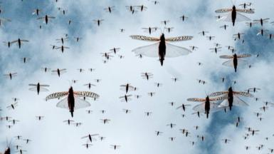 A swam of locusts in the sky