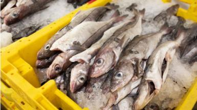Pallet of fish at Grimsby Fish Market