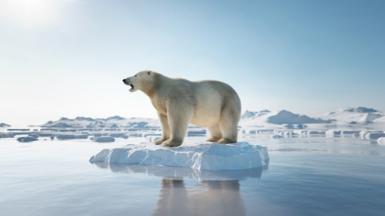 Polar bear on ice floe. Melting iceberg and global warming. - stock photo