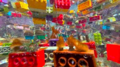 Lego with coral