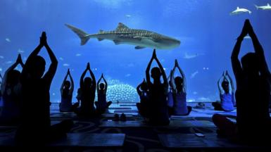 Women perform yoga at Zhuhai Chimelong Ocean Kingdom to celebrate Mother's Day on May 9, 2021 in Zhuhai, Guangdong Province of China.