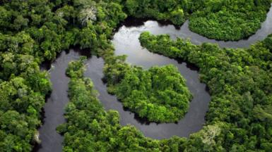 Amazon rainforest]
