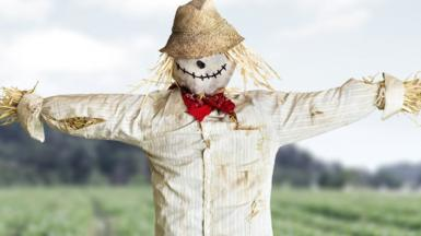 A generic photo of a scarecrow