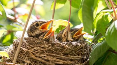 Birds Building Nests In Eggstraordinary Places Cbbc Newsround