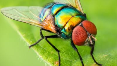 Bug Bug (2006)