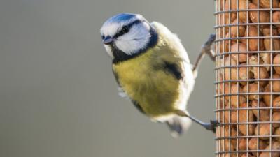 How you can help garden wildlife this winter - CBBC Newsround