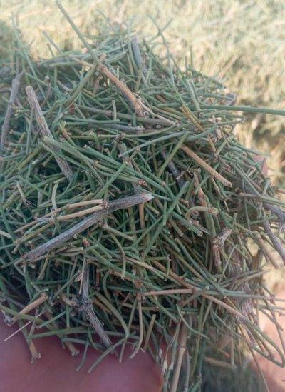 Commonly-found plant ephedra is being used to produce meth