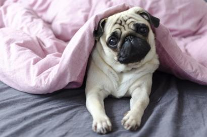 Día Mundial De Los Animales 10 Razones Por Las Que Es Bueno