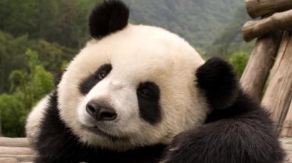 Conoce los animales más tiernos pero letales del mundo