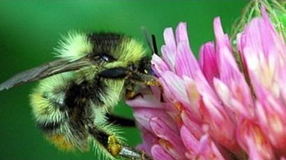 Bees It S Not All About Honey For Wales 180 Varieties Bbc News