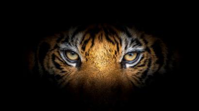 Картинки тигр и дракон