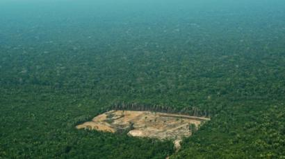 Amazon Rainforest Deforestation Worst In 10 Years Says Brazil