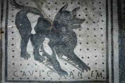 Pompeii guard dog mosaic back on show - BBC News