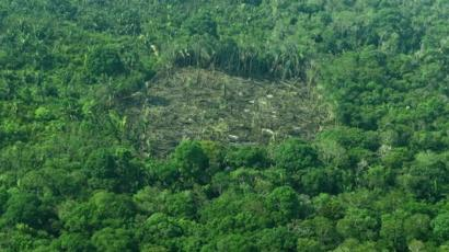Brazil Minister Amazon Deforestation Drops By 16 Bbc News