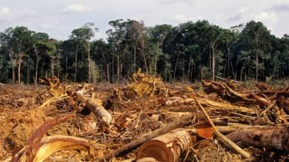 Desmatamento: Amazônia perdeu 20% e Cerrado, 50%, desde 1970 ...