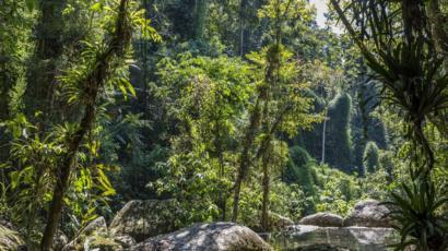 Animais Carbonizados E Silêncio No Lugar Do Verde E Som De