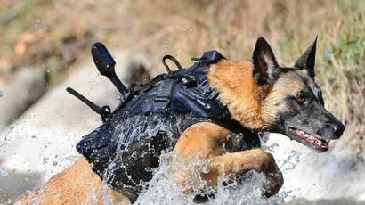 Image result for military trained dogs
