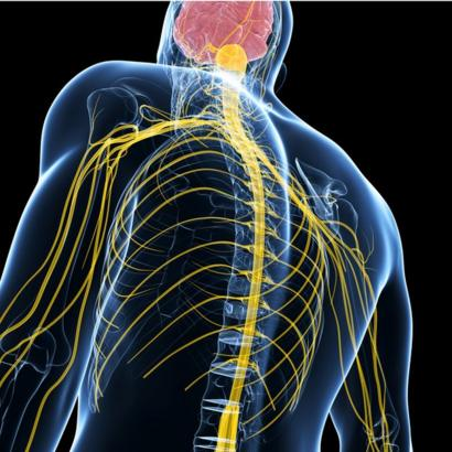 ¿Puede el daño nervioso causar erupciones en la piel?