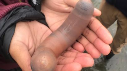 Penis 9 cali