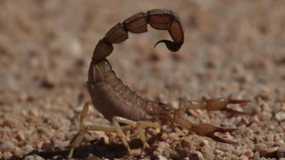 dolor en la ingle por picadura de insecto