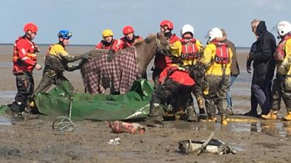 Horses stuck in thick beach mud on Moreton Beach rescued