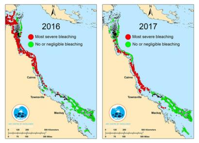 Great Barrier Reef Two Thirds Damaged In Unprecedented