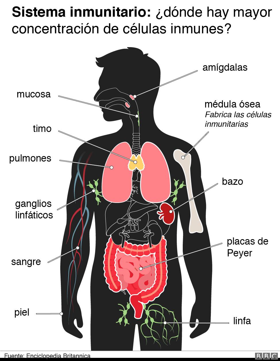 como entran los patogenos al cuerpo