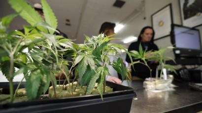 Законы о марихуане в сша тест на марихуану купить украина