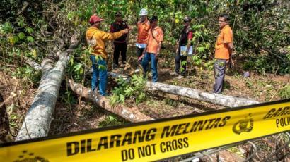 Pohon Sengon Penyebab Mati Listrik Yang Ditandai Dengan